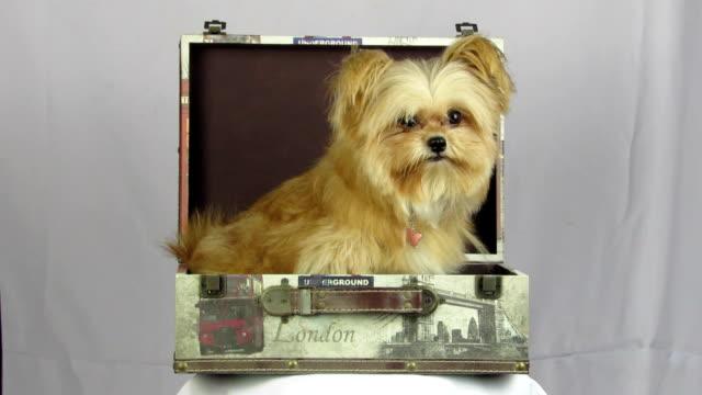 Moelleux chien dans la boîte