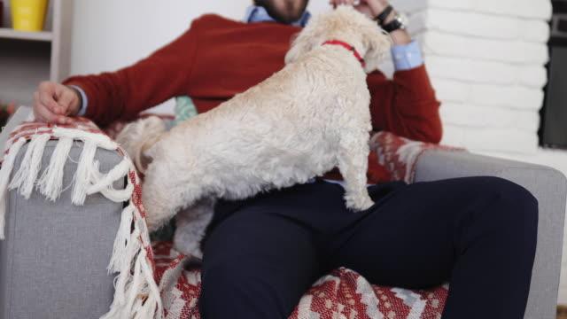 flauschige hund des menschen bester freund - multitasking stock-videos und b-roll-filmmaterial