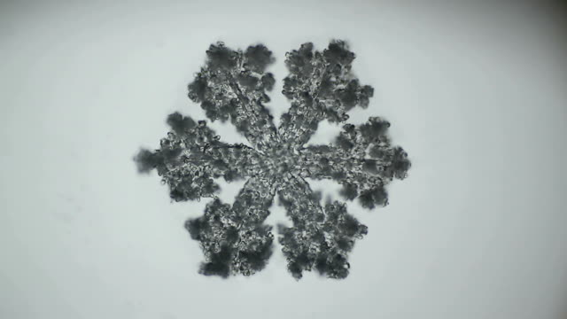 fluffy snowflake melts under the microscope