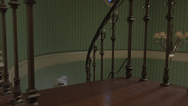 a fluffy, white cat walks up a beautiful staircase in an upper-class home and then opens the door to the bathroom. - lamp shade stock videos and b-roll footage