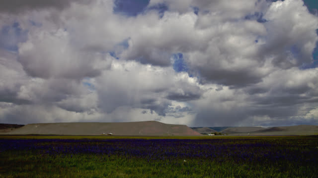 TIME LAPSE WIDE SHOT fluffy white clouds in blue sky over field of blue flowers with mountains in background, Oregon
