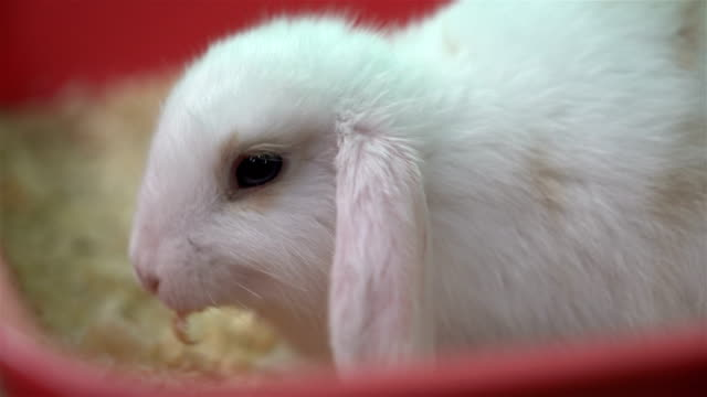 fluffy white rabbit - petshop stock videos and b-roll footage