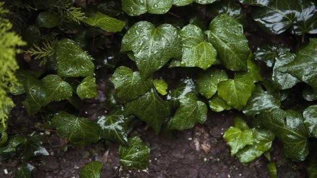 fluorescent plants - macro stock videos & royalty-free footage