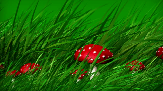 fly agaric mushroom - fly agaric stock videos and b-roll footage