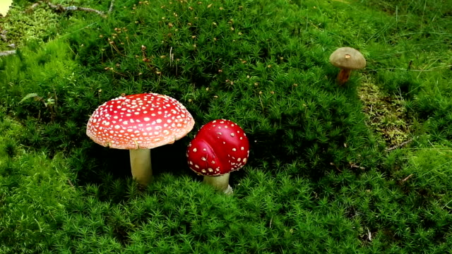 fly agaric - toxic substance stock videos & royalty-free footage