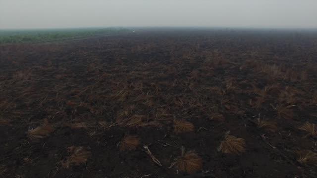 vídeos y material grabado en eventos de stock de fly by over vegetation growing on a palm oil plantation in this aerial video taken in ogan komering ilir south sumatra indonesia on saturday oct 31... - isla de sumatra