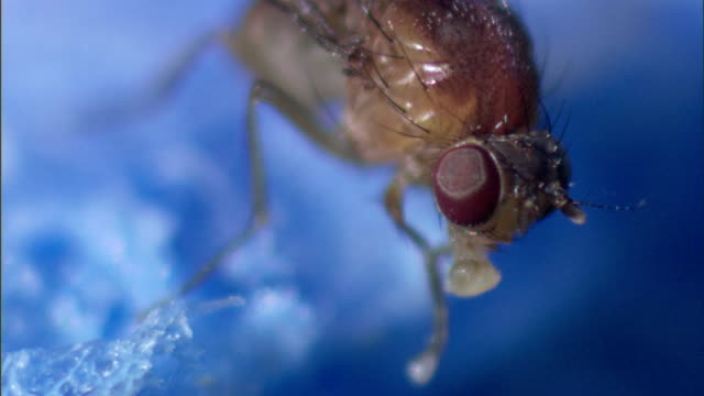 a fly cleans its legs and proboscis. - gliedmaßen körperteile stock-videos und b-roll-filmmaterial
