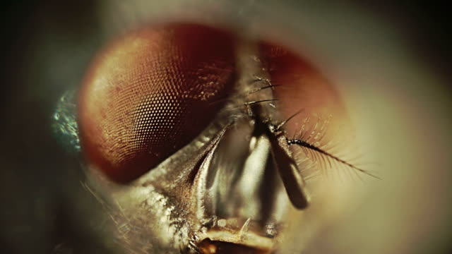 fly close-up - insect stock videos & royalty-free footage