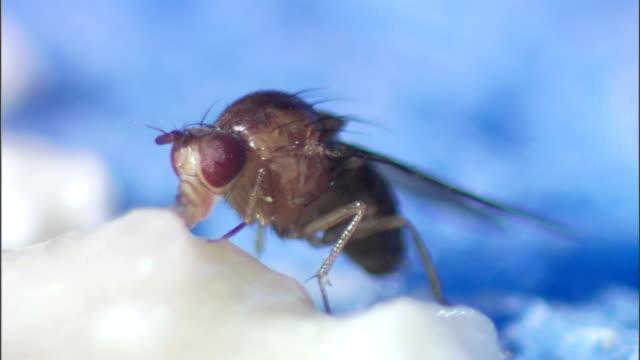 a fly feeds on a white substance. - gliedmaßen körperteile stock-videos und b-roll-filmmaterial
