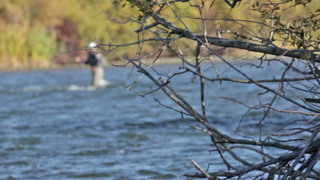a fly fisherman wades and fishes on the snake river in idaho on a sunny, fall day - スネーク川点の映像素材/bロール