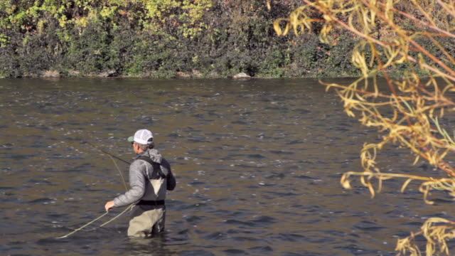 a fly fisherman wades and fishes on the snake river in idaho on a sunny, fall day - walking in water stock videos & royalty-free footage