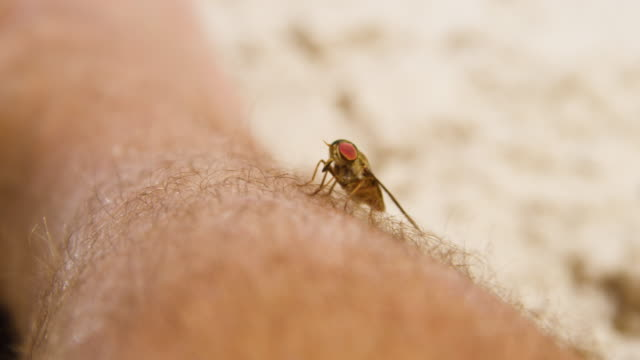 A fly flew from a man's foot