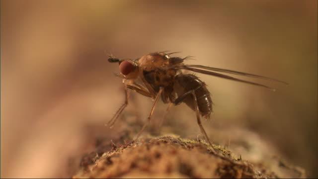 a fly grooms its legs and head. - gliedmaßen körperteile stock-videos und b-roll-filmmaterial