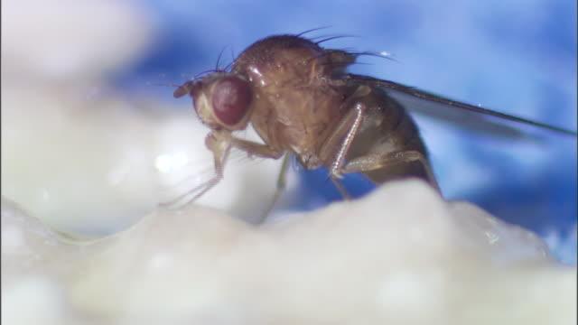 a fly grooms its legs on a pile of cotton balls. - gliedmaßen körperteile stock-videos und b-roll-filmmaterial