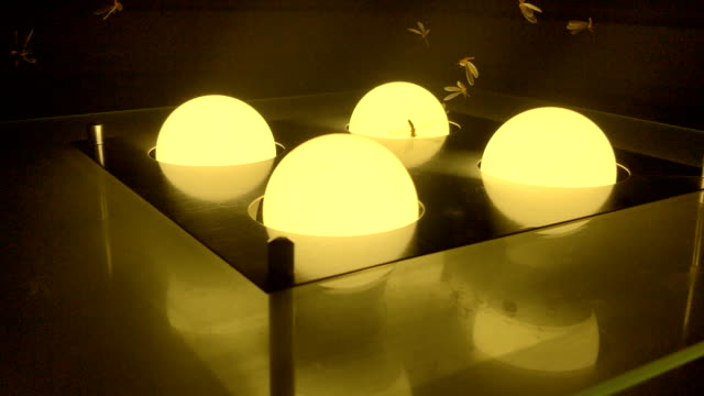 fly insect bulb lights - animal wing stock videos & royalty-free footage