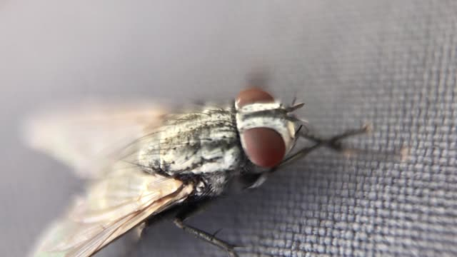 a fly insect from a macro view - housefly stock videos & royalty-free footage