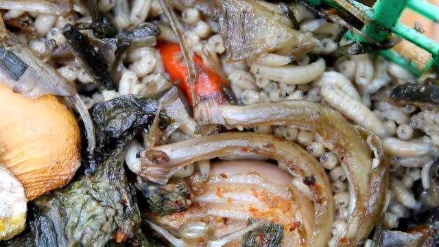 fly larvae, maggots - rotting stock videos and b-roll footage