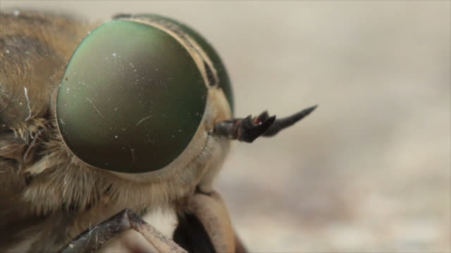 fly macro - housefly stock videos & royalty-free footage