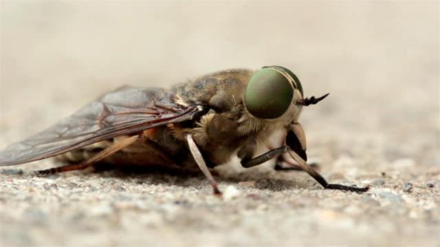 stockvideo's en b-roll-footage met fly macro - huisvlieg