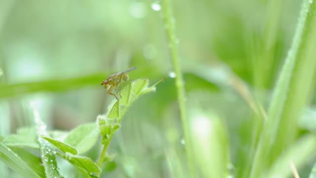 vídeos de stock, filmes e b-roll de voe sobre uma folha verde, macro close-up - mosca comum