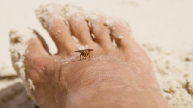 a fly on a man's foot - mosquito stock videos and b-roll footage