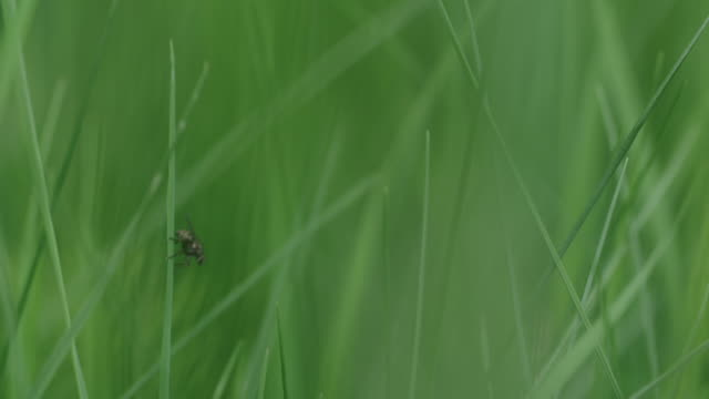 fly on blade of grass rests and flies away - blade of grass点の映像素材/bロール