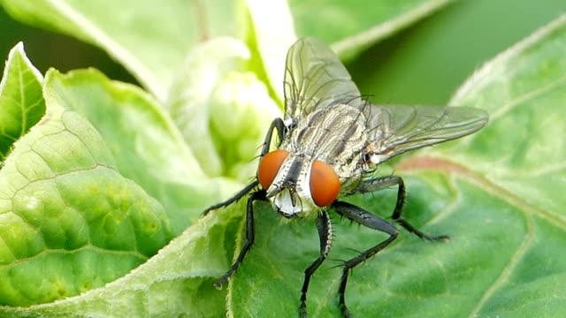vídeos de stock e filmes b-roll de fly on green leaf - ilustração biomédica