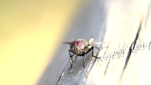 Fly on wood fence