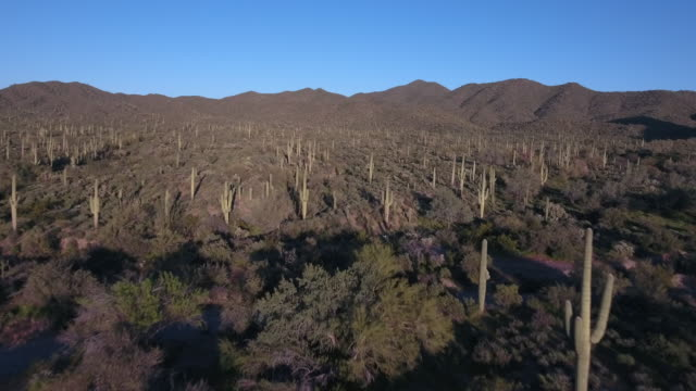 Fly over cactus garden medium hight- Drone Aerial 4K Arizona desert cactus, trail, adventure, discovery landscape, cholla, beautiful 4K Nature/Wildlife/Weather Drone Aerial View