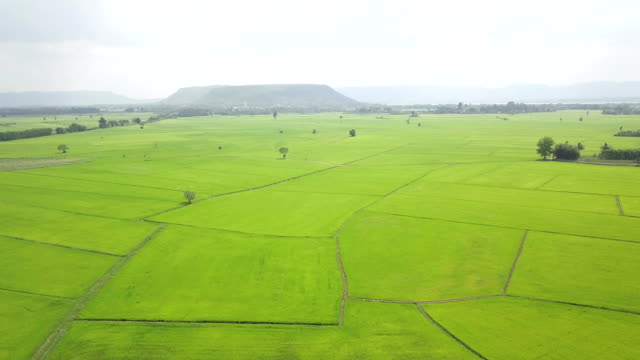fly over green rice field in summer - soya bean stock videos & royalty-free footage