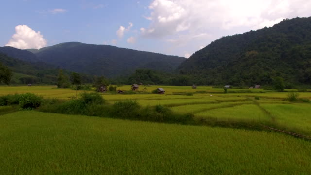 Fly over rice paddy