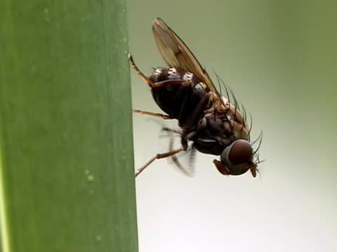 fly - stubenfliege stock-videos und b-roll-filmmaterial