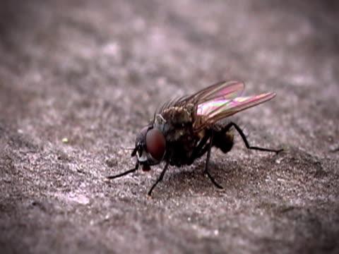stockvideo's en b-roll-footage met fly - huisvlieg