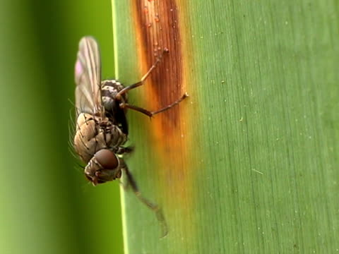 fly - invertebrate stock videos & royalty-free footage