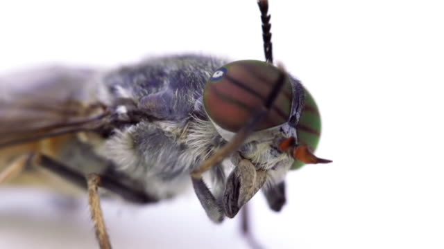 vidéos et rushes de fly - oeil d'animal