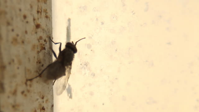 fly walking on dirty window - copy space - housefly stock videos & royalty-free footage