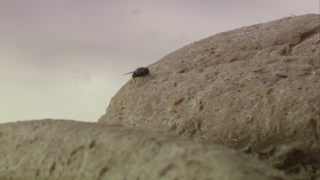 A fly walks on a loaf of bread.