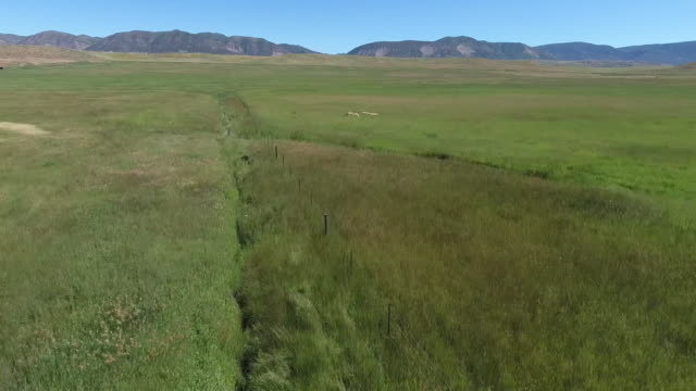 fly with birds follow 4k drone tracking aerial view wildlife herd hunting, deer, elk, bison, hawk, buck, cows, bird, buffalo, directors choice, editors choice, magic hour, sun flare, grassland, epic - bird hunting stock videos & royalty-free footage