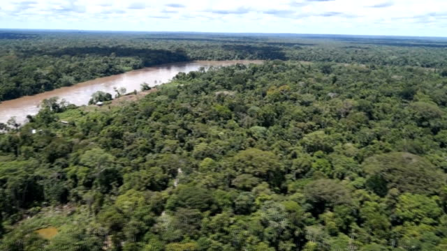 Flyby of rainforest filmed from helicopter hatch.