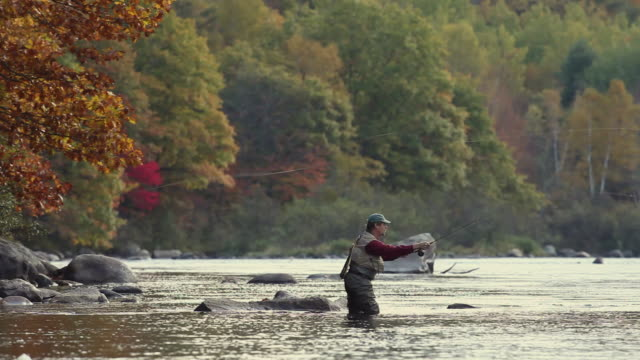 vidéos et rushes de ws pan fly-fisherman fishing in river / the forks, maine, usa - pêcheur