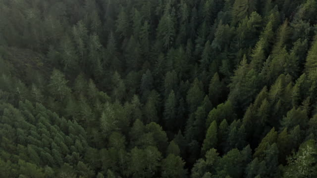 flying above a pine forest - mountain peak stock videos & royalty-free footage