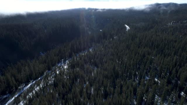 vidéos et rushes de voler au-dessus d'une forêt de pins - nord ouest américain