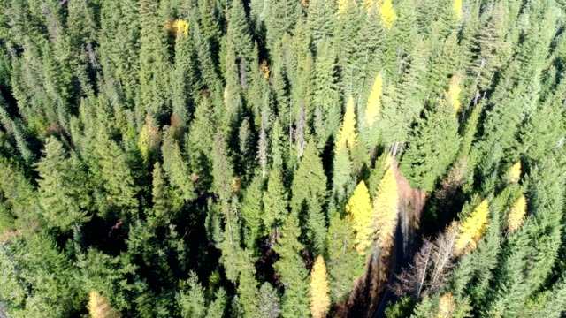 flying above a pine forest - mt hood stock videos & royalty-free footage