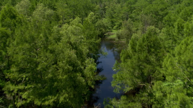 flying above a rural bayou in louisiana with birds in flight - artbeats 個影片檔及 b 捲影像