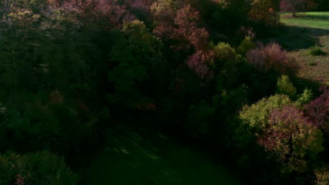 vídeos y material grabado en eventos de stock de volar por encima de los árboles de otoño - perspectiva desde un helicóptero