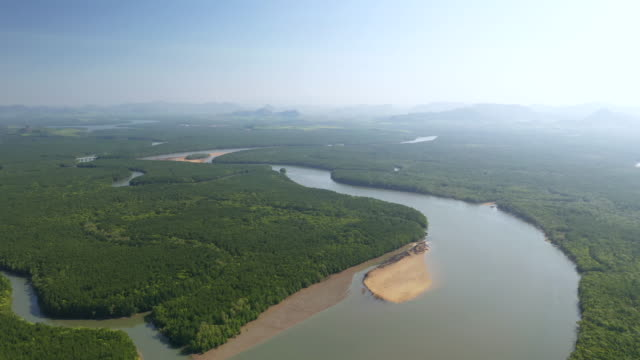 flying above backward of tropical rainforest and many river - tropical tree stock videos & royalty-free footage