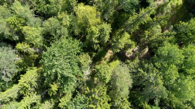 Flygande ovanför skogen