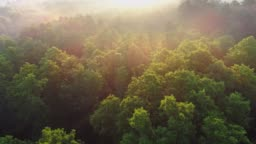 Flying above green forest during sunrise and fog. Sun rays shining everywhere. Fabulous nature floral background. Aerial shot, UHD
