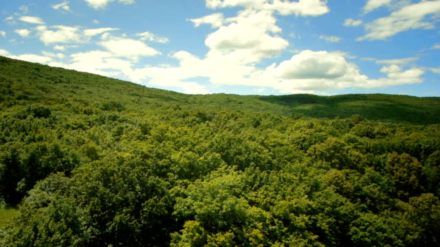 hd: flying above green treetops - landscape stock videos & royalty-free footage