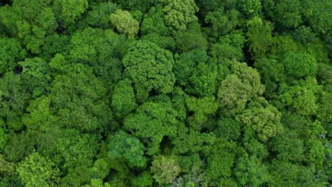 vídeos y material grabado en eventos de stock de volando por encima de la exuberante selva tropical - región del amazonas